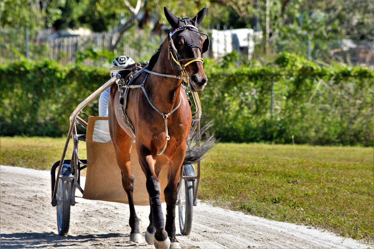Ravien suosio laskussa Suomessa, mutta kansainvälinen hevosurheilu kukoistaa